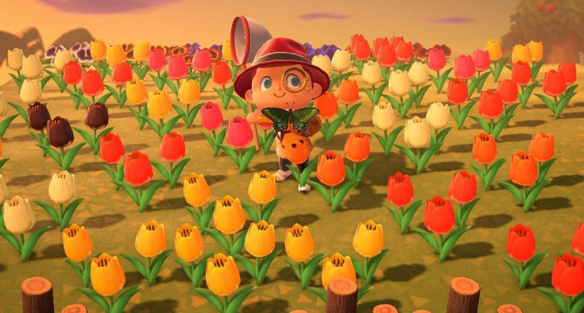 Animal Crossing New Horizons Sternis Insekten
